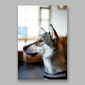 Postcard「Hungry Dog」13cm×18cm Original Print
