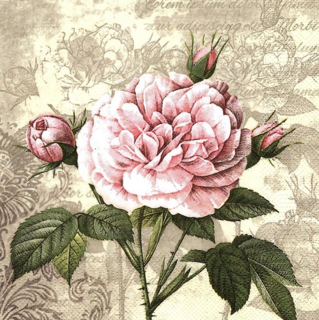 【Maki】バラ売り2枚 ランチサイズ ペーパーナプキン Vintage Rose with Buds クリーム