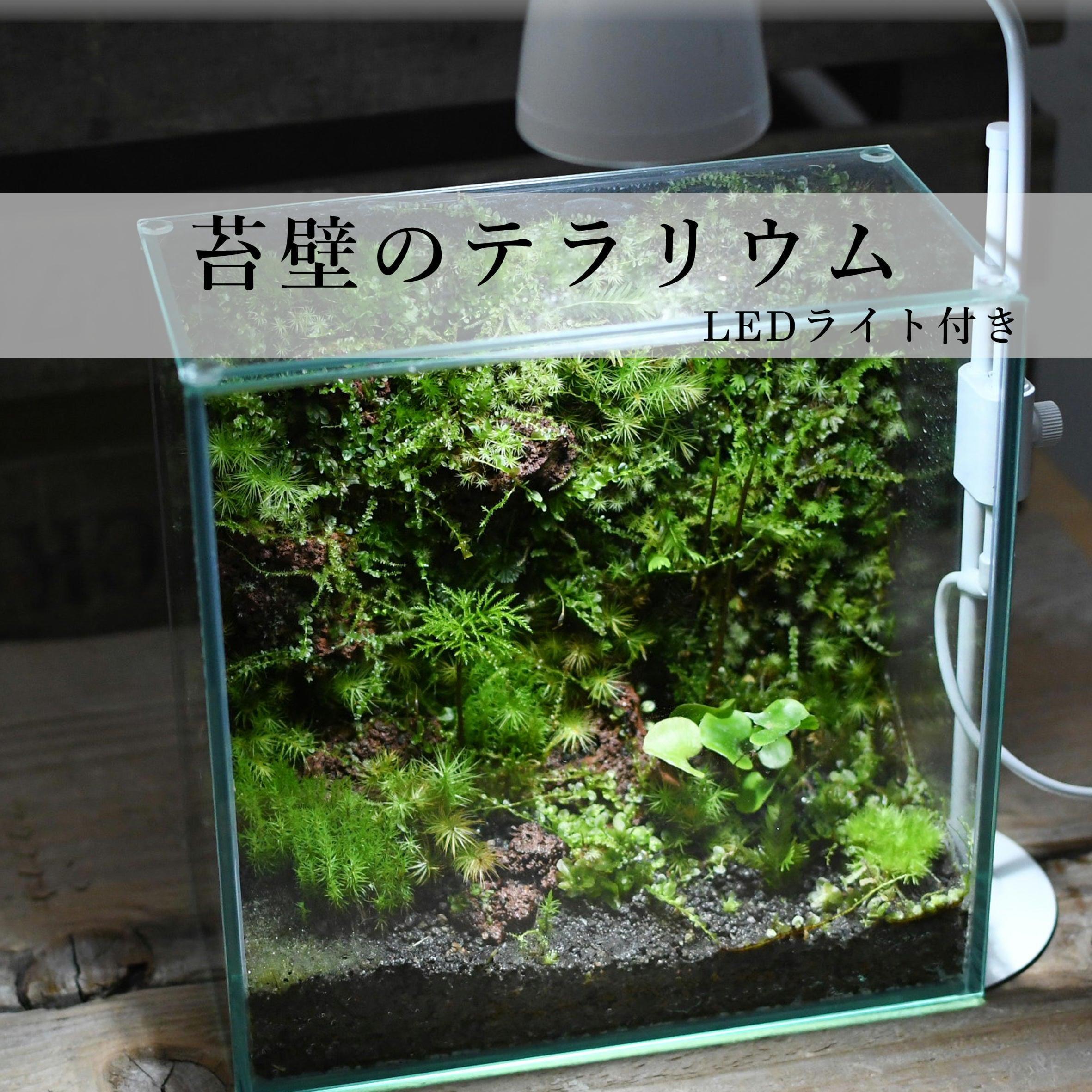 苔壁のテラリウム【苔テラリウム・現物限定販売】◆LEDライト付き
