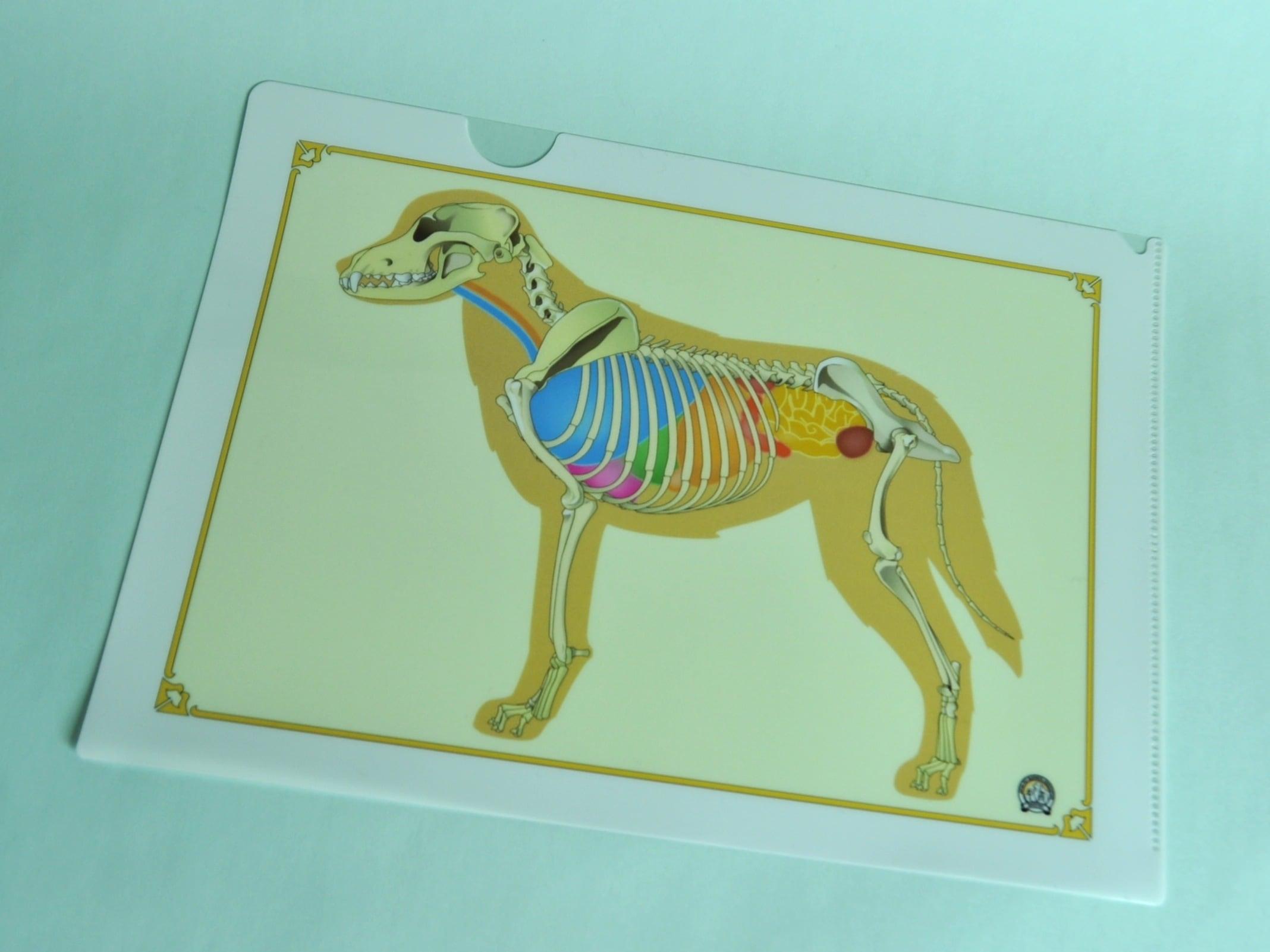 犬骨格プリント クリアファイル A4サイズ
