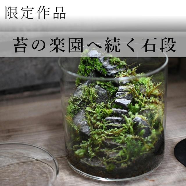 苔景−苔の楽園へ続く石段 −【苔テラリウム・現物限定販売】