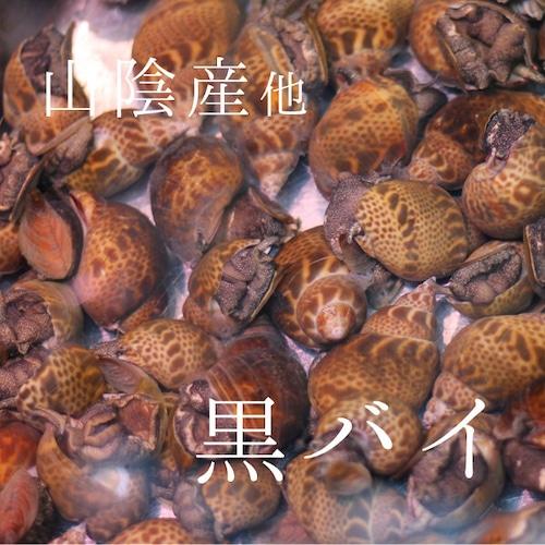 生 クロバイ 黒バイ 本バイ貝 1キロ 山陰産 他 豊洲直送 高級貝類【黒バイ1K】 冷蔵