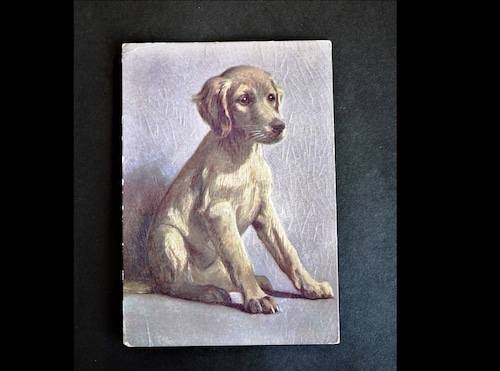 イギリス アンティークポストカード 犬の絵 絵葉書 The Saluki  サルーキー