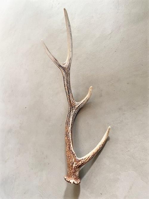 鹿の角 置物