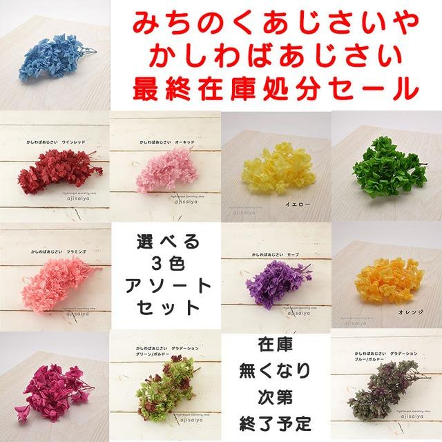 最終在庫処分セールです【選べる3色 】かしわばあじさい こわけ みちのくあじさいや <紫陽花 プリザーブド>