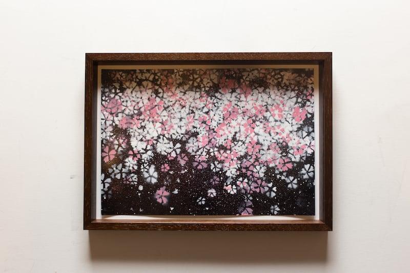 Sakura (額入り特別作品)