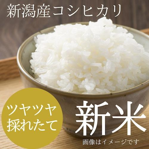 新米 新潟コシヒカリ 5kg (5キロ)新潟米 精白米 農家のお米 2021年 新潟県阿賀野産