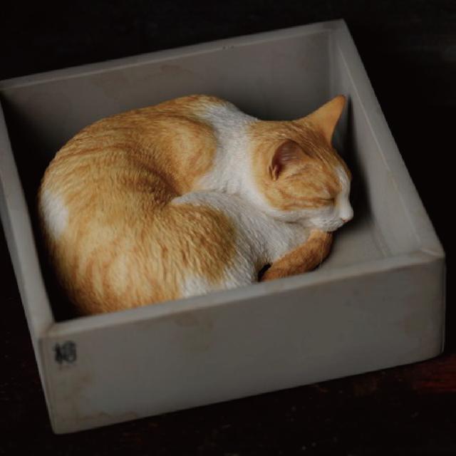 Sleeping orange cat  |森口修|
