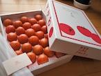 フルーツトマト秀品セレクト(大)1,6kg