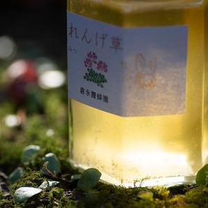 倉永養蜂園 蓮華草の花 はちみつ