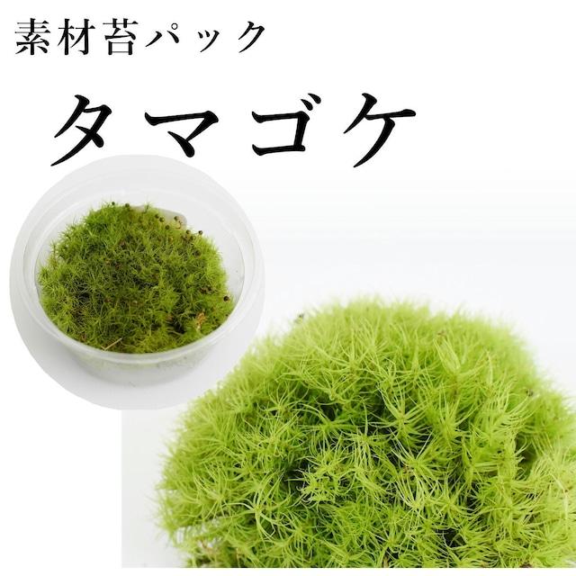 タマゴケ 苔テラリウム作製用素材苔