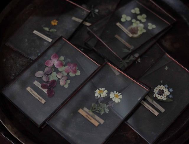 Wedding gift [Glass specimen × 20pieces] / 引き出物 ガラス標本20枚SET