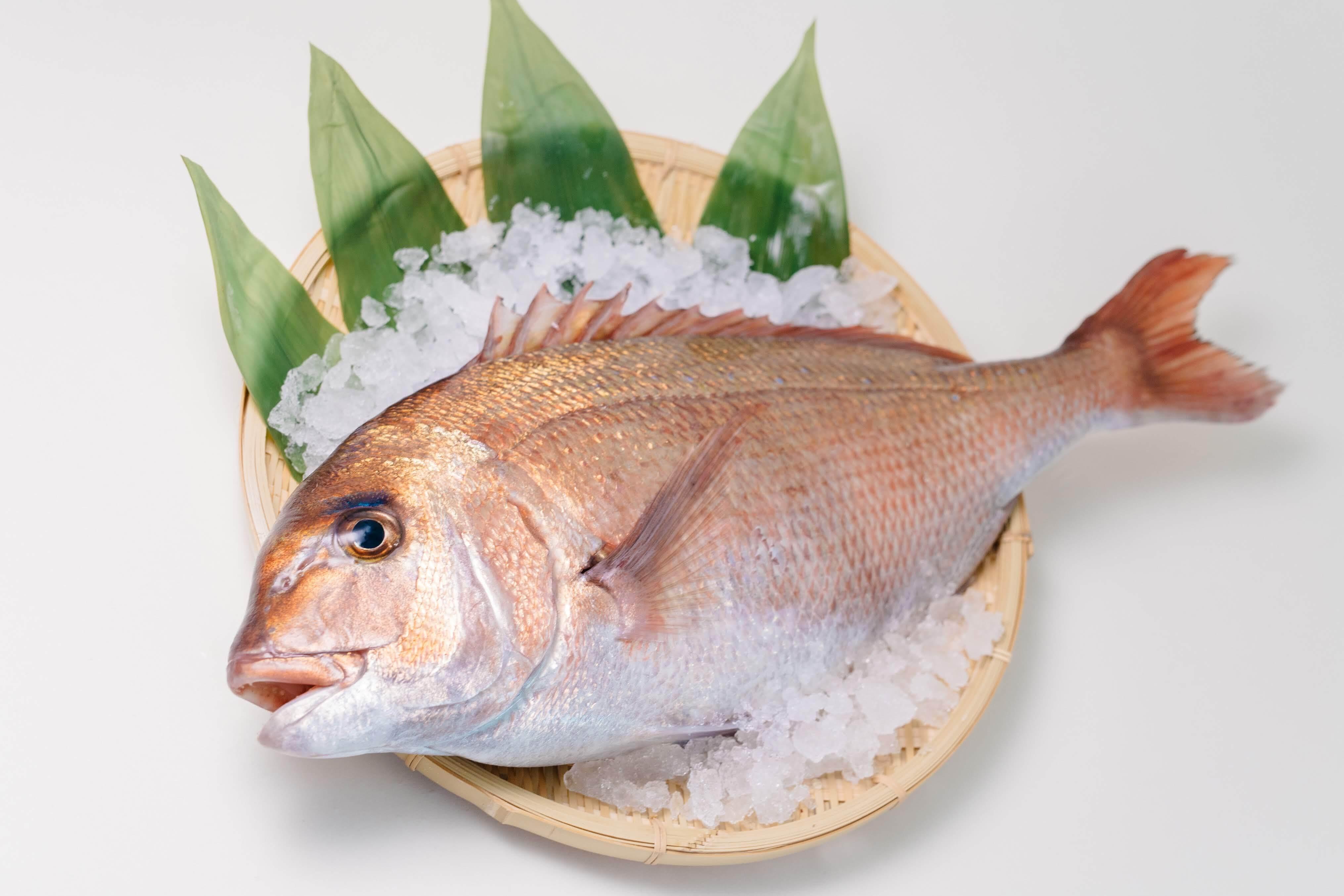 丸っと1尾⭐︎真鯛をお届け!(3~4人前)ウロコ・内蔵処理済(冷蔵)