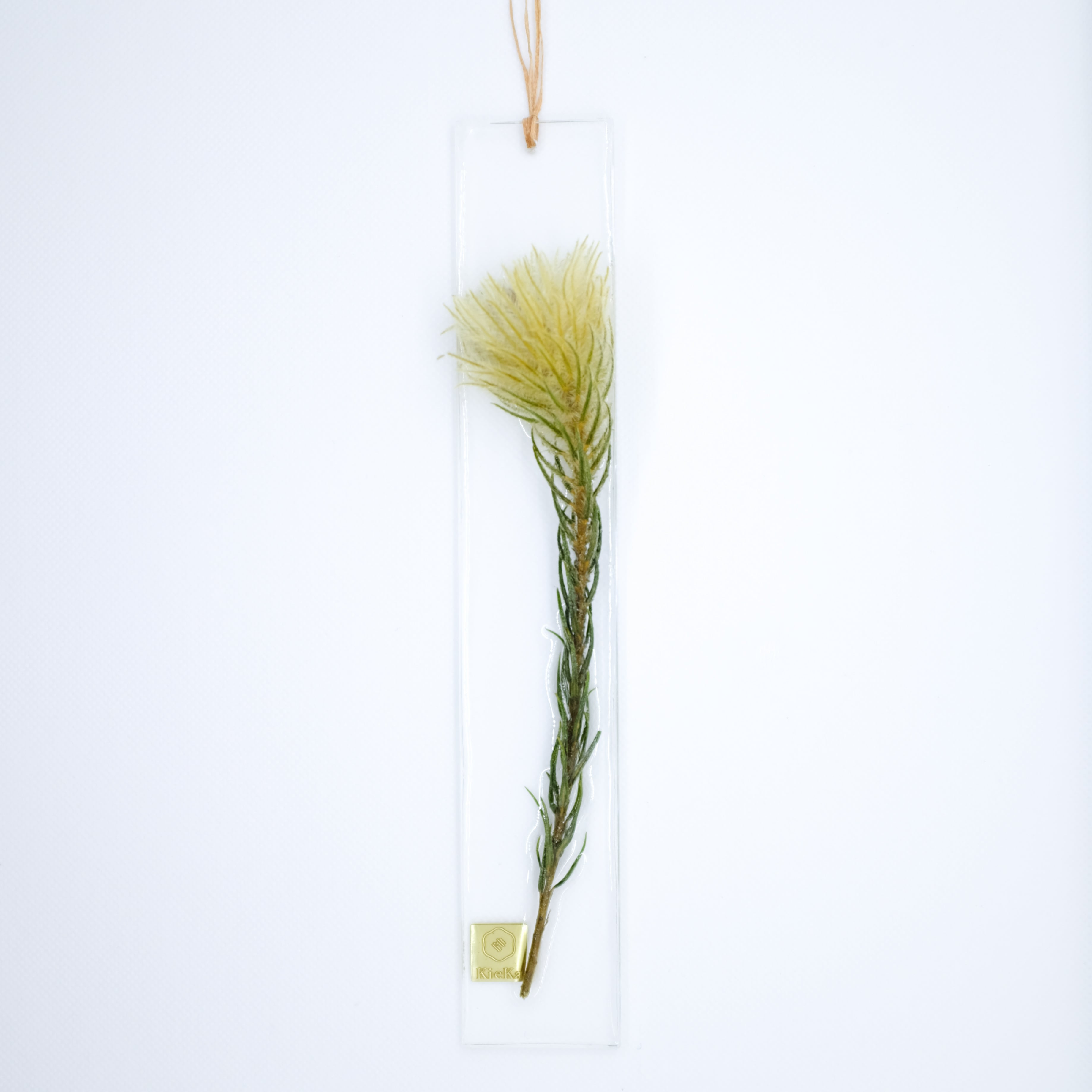 dried flower S フィリカ