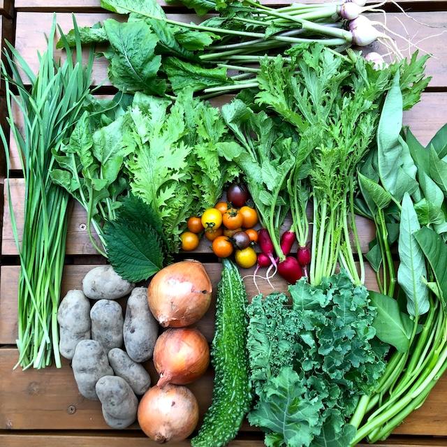 野菜セット(大) 定期便・毎週・無制限