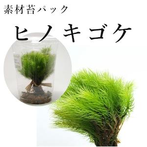 ヒノキゴケ 苔テラリウム作製用素材苔