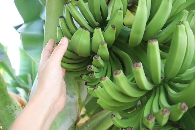 皮ごと使いました。徳島産有機バナナケーキ