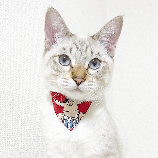 【力士柄】猫用バンダナ風首輪/選べるアジャスター 猫首輪 安全首輪 子猫から成猫