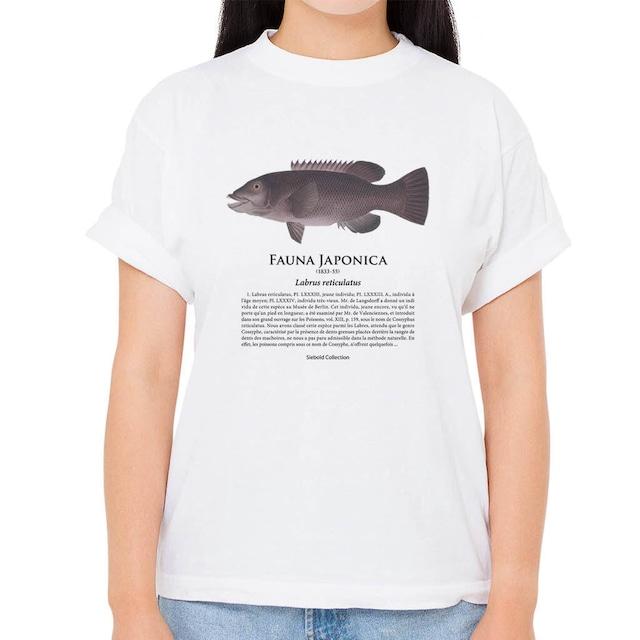 【カンダイ1】シーボルトコレクション魚譜Tシャツ(高解像・昇華プリント)