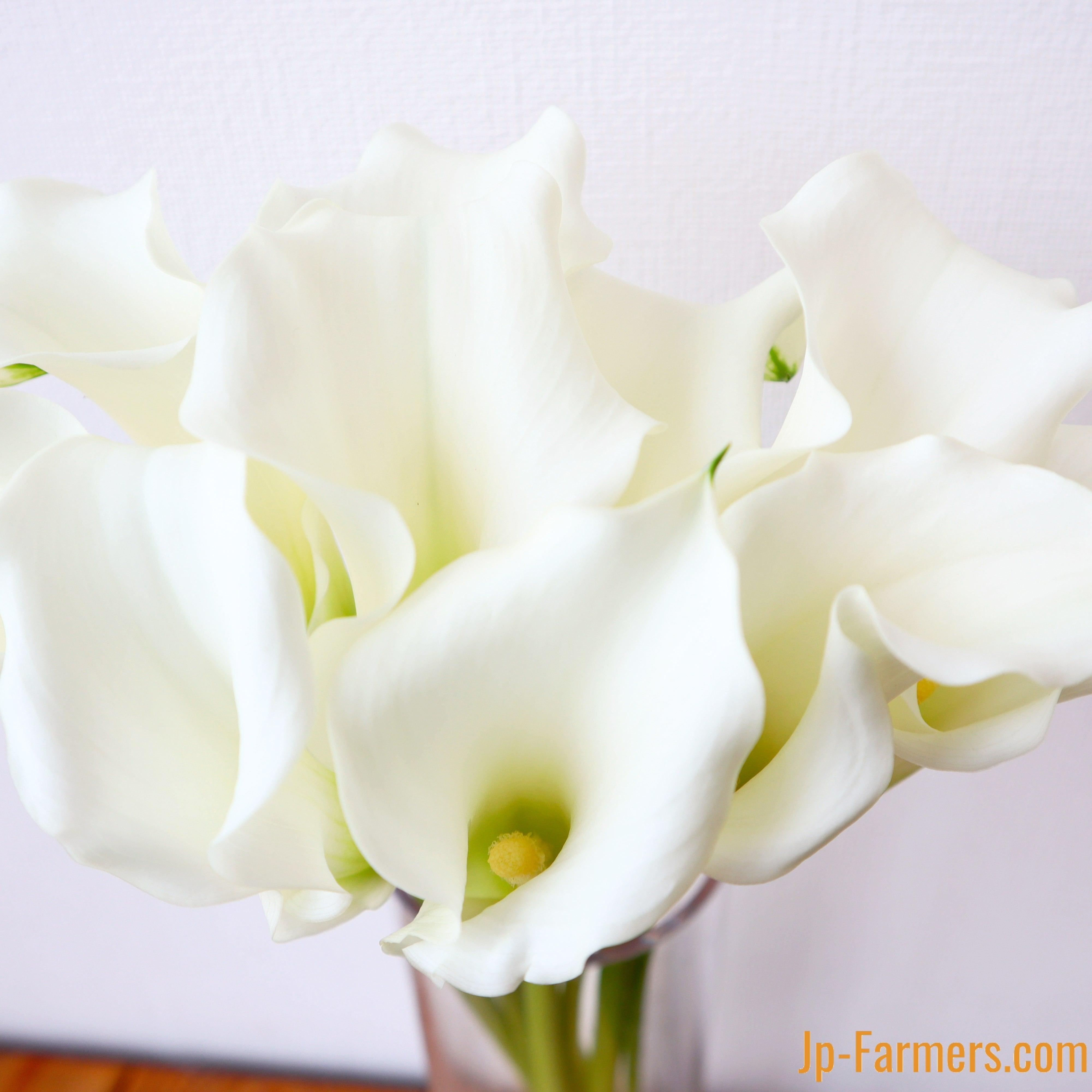 フラワースピリット カラーホワイト 20本 のご紹介。