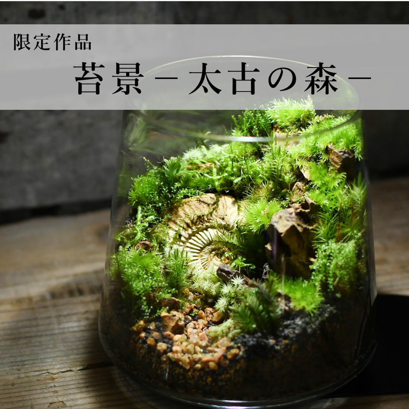 苔景−太古の森−【苔テラリウム・現物限定販売】