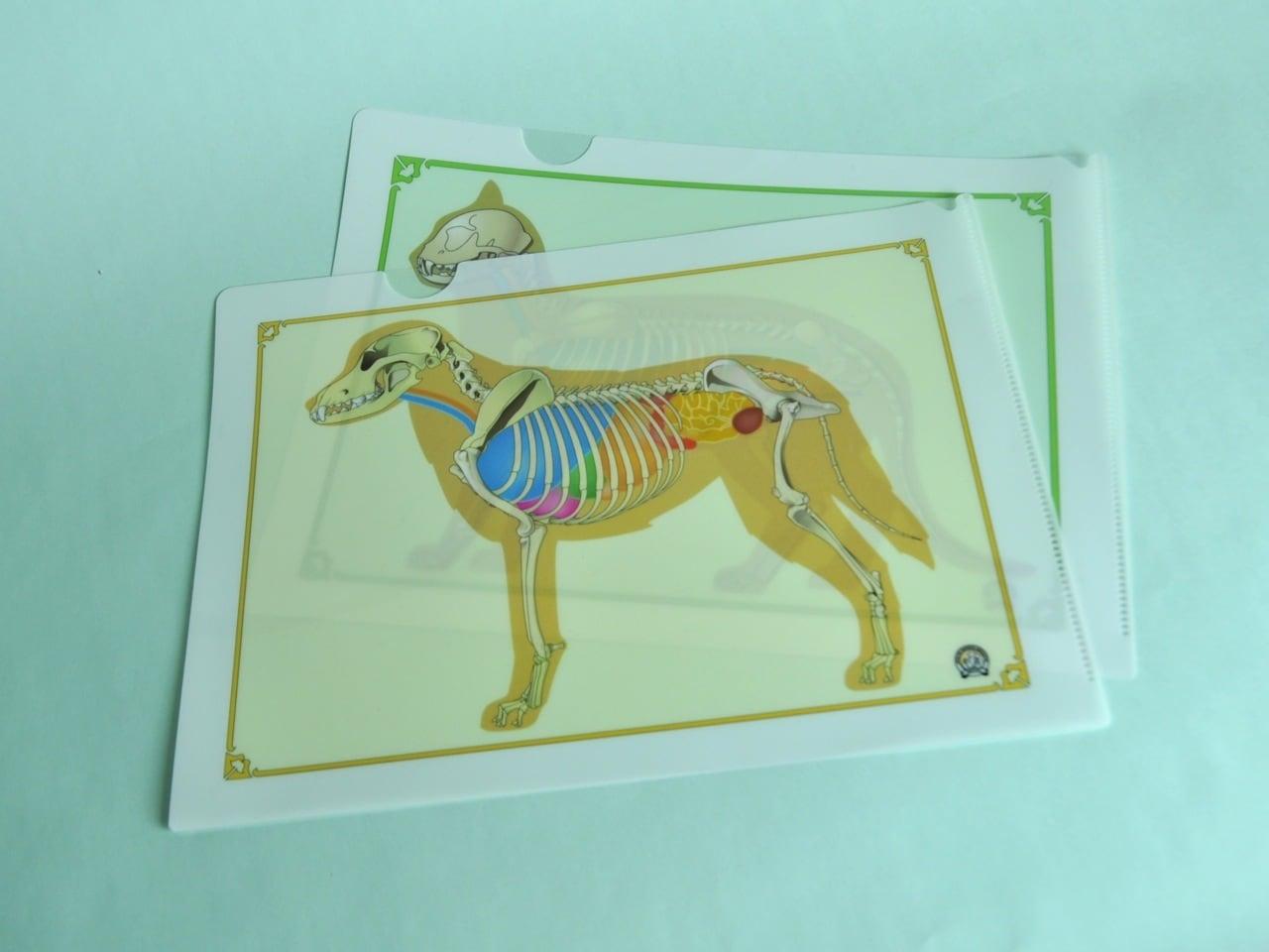 2枚セット!犬猫骨格プリント クリアファイル A4サイズ