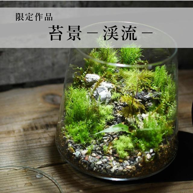 苔景−渓流− 2021.3.12#4【苔テラリウム・現物限定販売】
