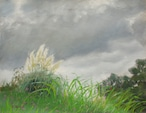 NO.17「雨曇りのパンパスグラス・9月」