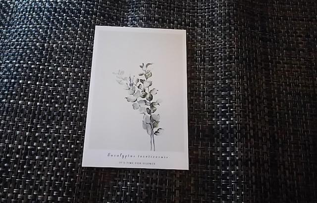 植物 ポストカード X