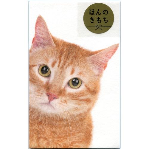 猫ぽち袋(ひょっこりニャンコ)トラネコ