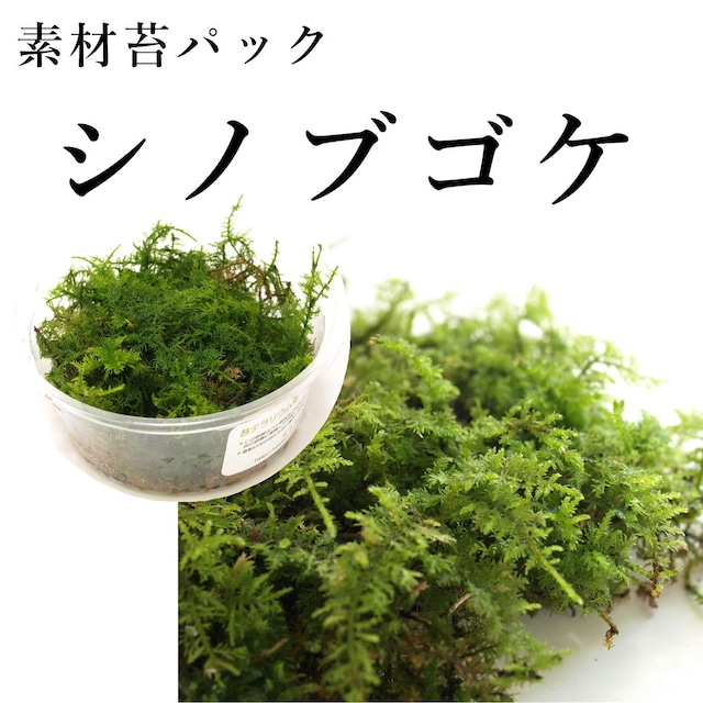 シノブゴケ 苔テラリウム作製用素材苔
