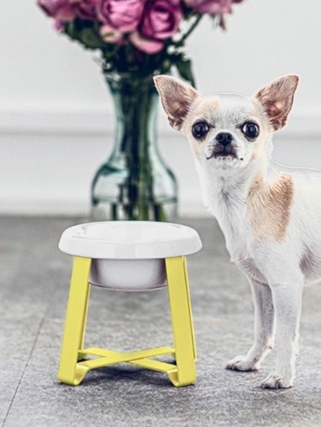 【予約】Pecolo Food Stand Sセット 犬の生活限定色カナリヤイエロー+選べるフードボウル陶器浅型or陶器深型orステンレス