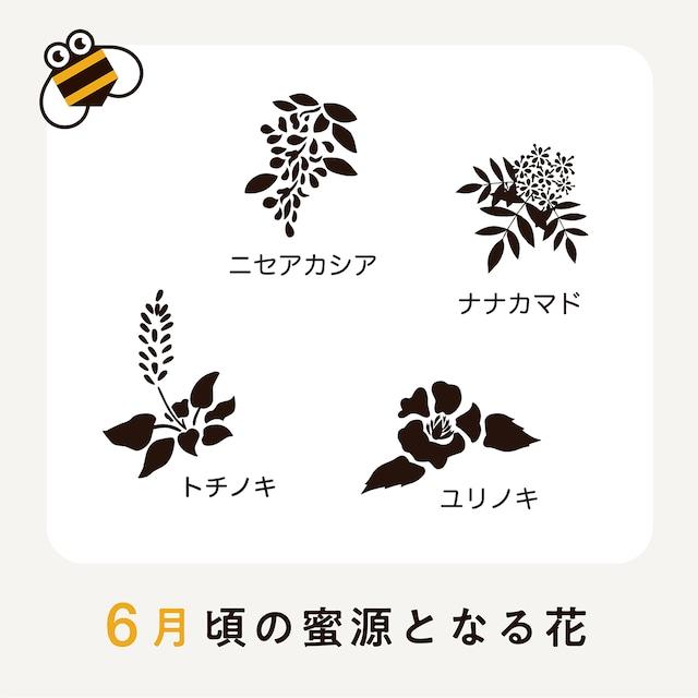 NEW!【6月】さっぱち蜂蜜2021