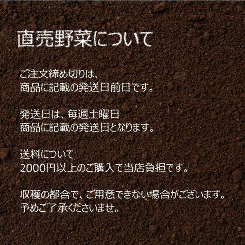 新鮮な冬野菜 : ネギ 3~4本 1月の朝採り直売野菜 1月18日発送予定