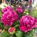 季節のお花bouquet or Arrangement 初夏 ギフトにもご自宅用にも