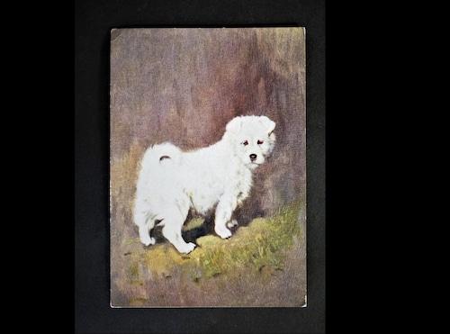 イギリス アンティークポストカード 犬の絵 絵葉書 The Samoyed サモエド