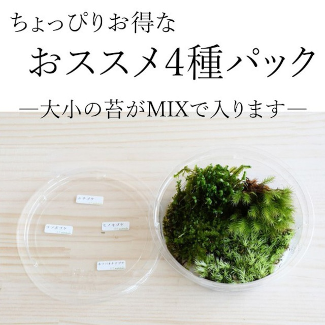 テラリウム作製用コケ おススメ4種入りパック ◆種類の指定可