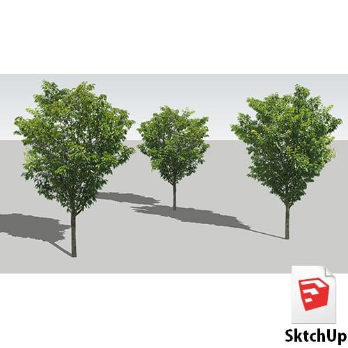 樹木SketchUp 4t_004 - 画像1
