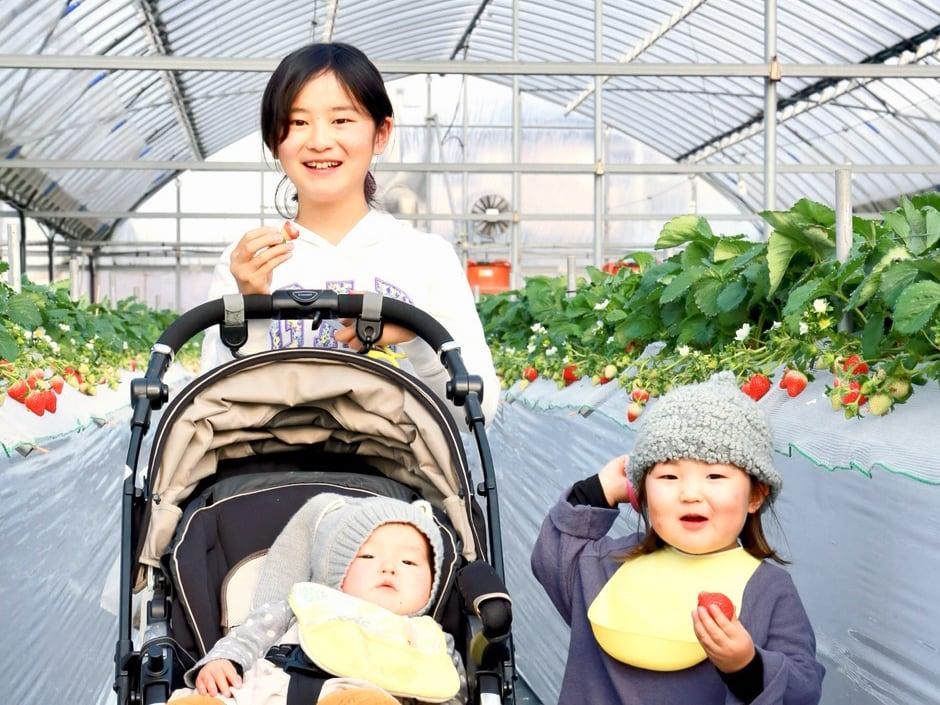 冷凍いちご(あまおう)1.6kg(800gx2袋) お菓子、ジャム作りに最適!