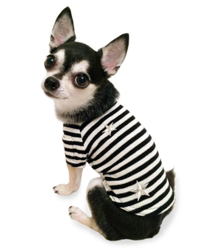 犬の生活 15AW ボーダーTシャツ スター