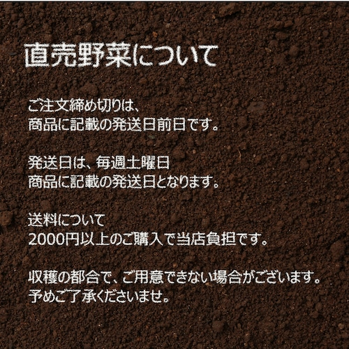 10月の朝採り直売野菜 : ネギ 3~4本 新鮮な秋野菜 10月17日発送予定