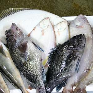 【飲食店向け】 噴火湾産 新鮮魚介類パック 5kg詰