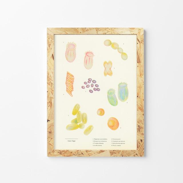 Insect Eggs/なかむら彩香/石引パブリック「リソアートプリント」シリーズ