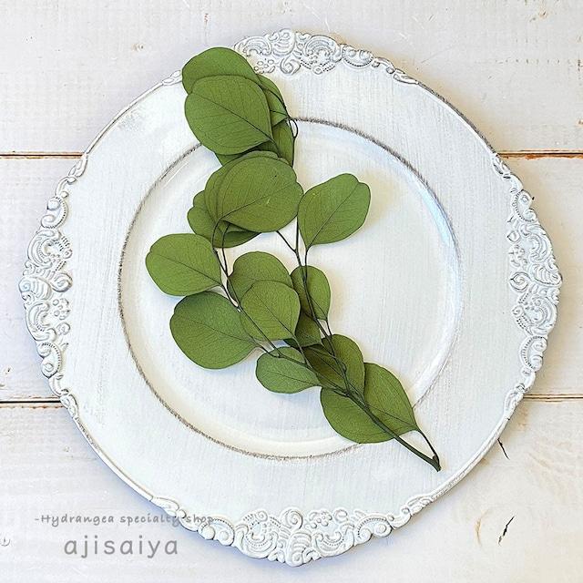 まんまる葉っぱがかわいい ユーカリ・ポピュラス グリーン <プリザーブドフラワー>