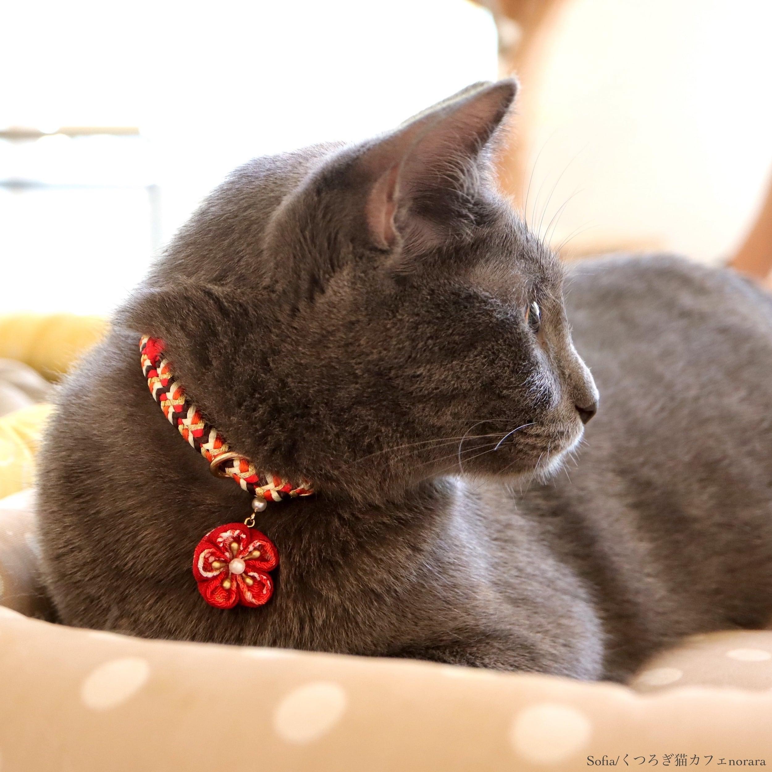 【猫首輪】Soleil NEW ソレイユ