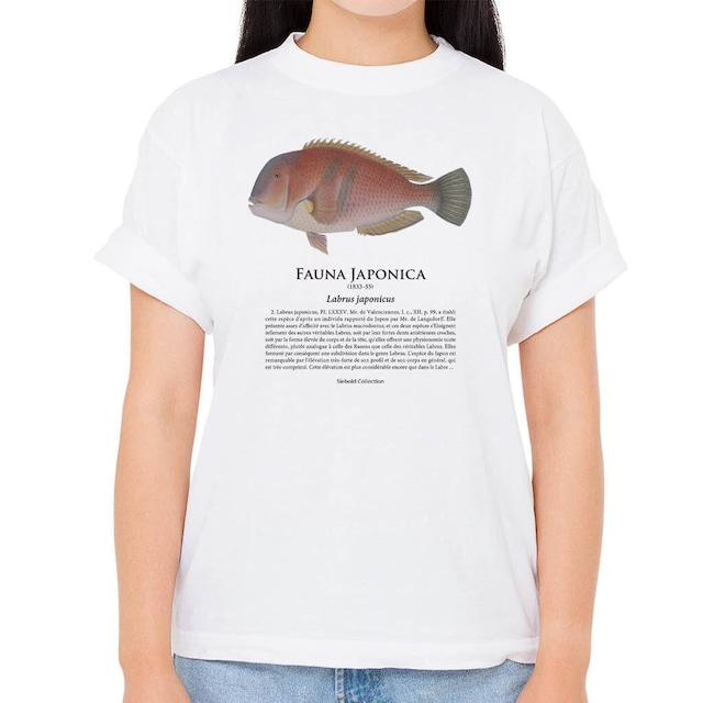 【イラ】シーボルトコレクション魚譜Tシャツ(高解像・昇華プリント)
