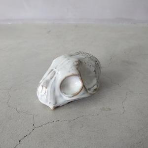 Baby Cat Skull BSK-005