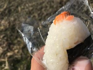 新米 !! 大自然米【10kg】精白米