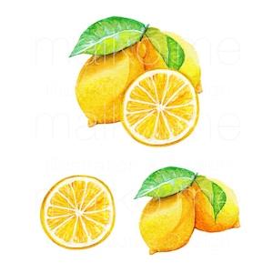 レモン/イラスト素材