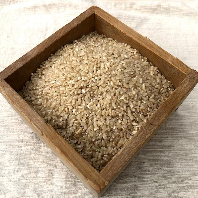 玄米「彩のきずな」2021年産新米 5㎏入り